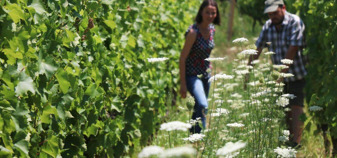 kert biológiai sokszínűség agrobiodiverzitás