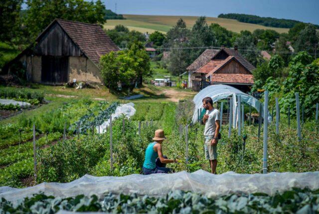 közösségi gazdaságok