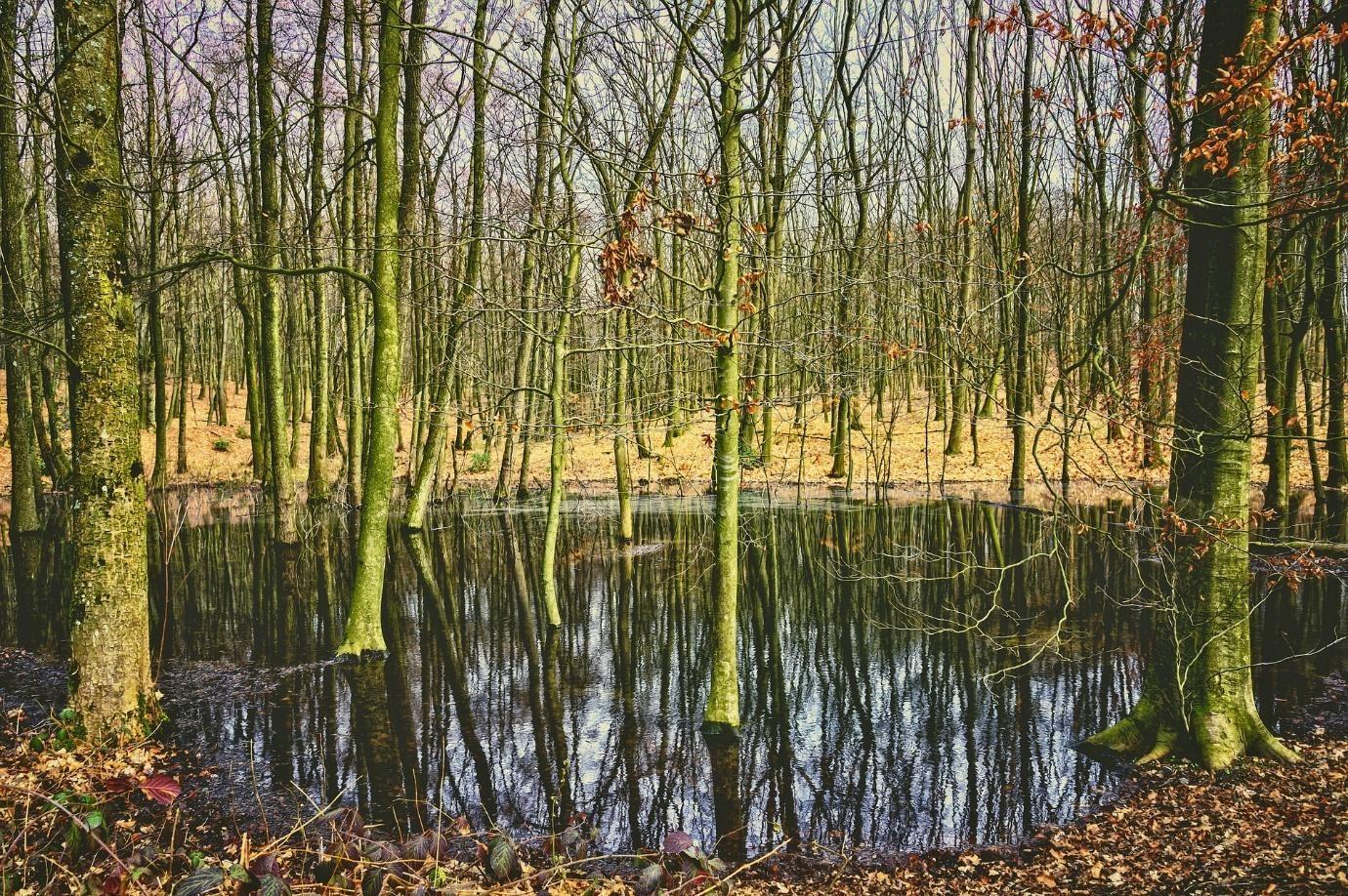 foszfátok erdő