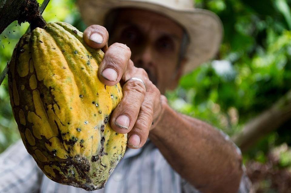 méltányos kereskedelem fairtrade