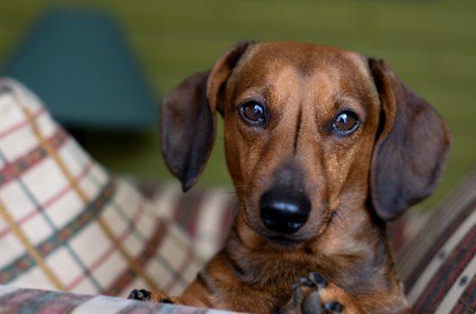 veszélyes kutyaeledel termékvisszahívás