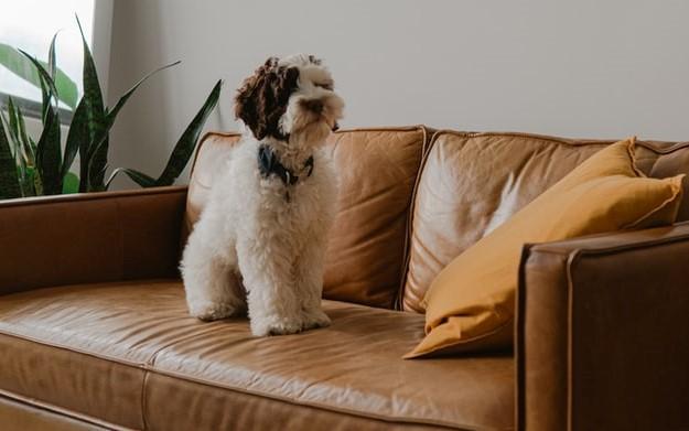 kutya lakás levegő