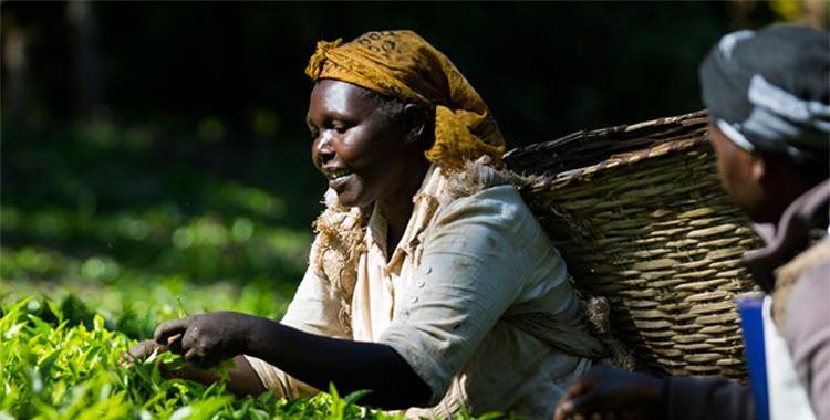 méltányos kereskedelem fair trade
