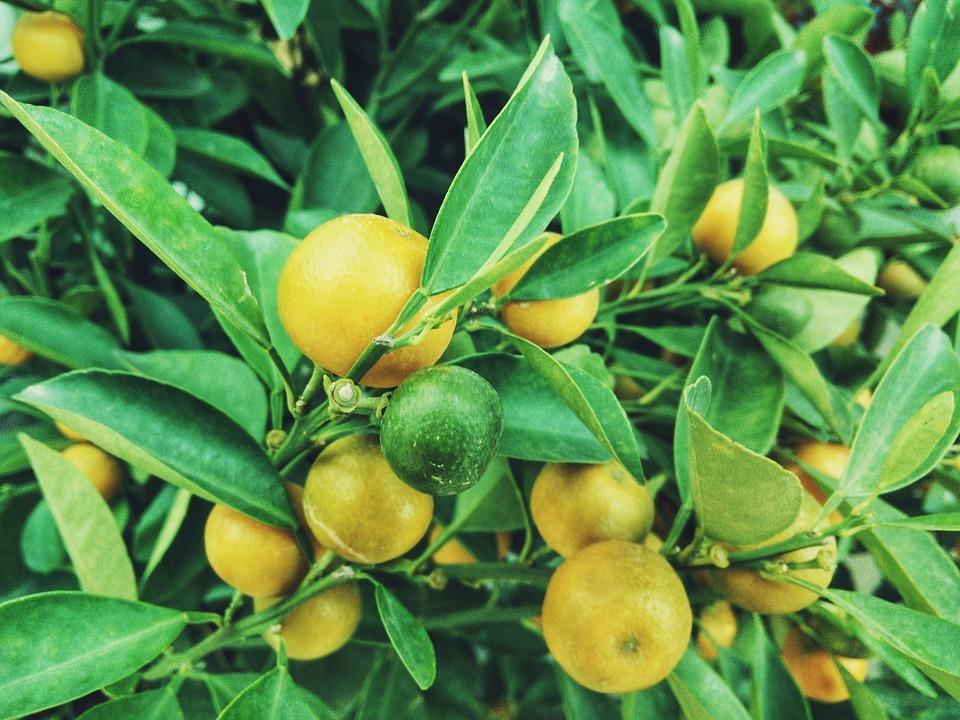 Veszélyes-e a citrusok héja?