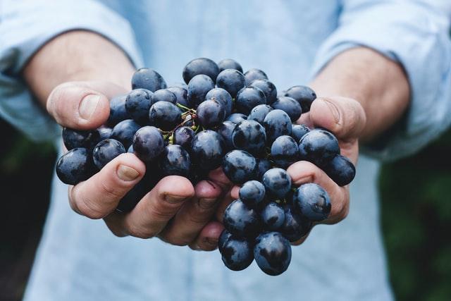 mi fán terem szőlő