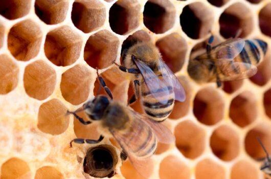 Méz valódi vagy hamisított