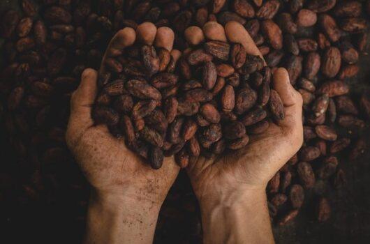 kakao_klimavaltozas_etikus_fogyasztas