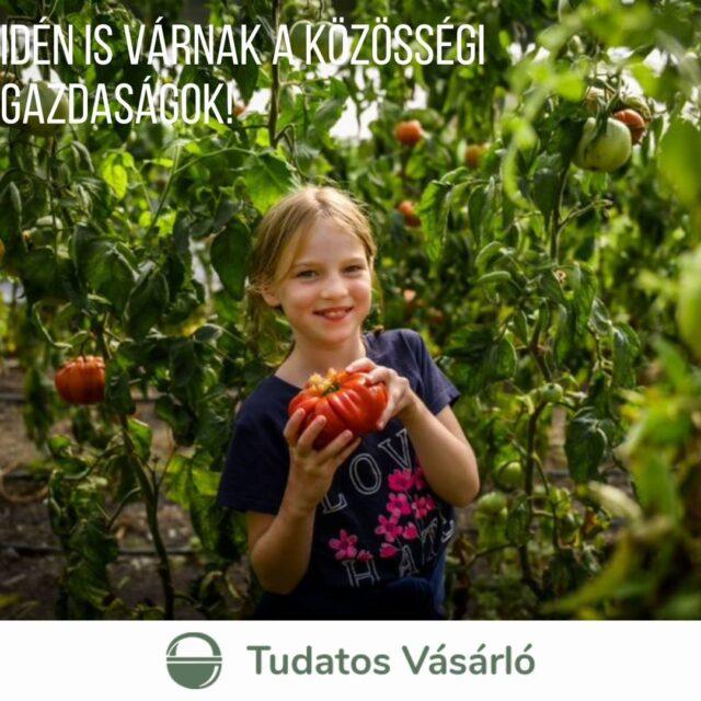 Friss, egészséges, megbízható a járvány idején is – ezek a közösségi gazdaságok várják a tagokat 2021-ben! Aki friss, helyi bio minőségű élelmiszerhez akar jutni rendszeresen, közvetlenül a termelőtől, az most nézzen körül és csatlakozzon egy közösségi gazdasághoz! Hogy könnyebb legyen a választás, idén is összeállítottuk a gazdaságok listáját, sőt, már térkép is segíti a választást.  Ételfelhalmozás, online rendelés, fagyasztott élelmiszer, kenyérsütés és sok főzés: a 2020-as év sok kihívást hozott a családoknak az élelmiszer beszerzés terén, és a 2021-es is hasonlónak ígérkezik. Sokan most jöttek rá igazán, mennyire fontos a megbízható forrásból származó élelmiszer. A közösségi gazdaságok tagjai ebben a nehéz időszakban kivételes helyzetben voltak: a gazdák a koronavírus időszakában is zökkenőmentesen ellátták vásárlóikat friss, helyi szezonális élelmiszerrel egész Európában és Magyarországon is – derült ki az Urgenci által végzett felmérésből. Meg is növekedett az érdeklődés irányukban, egyre többen keresik a megbízható forrásból származó, helyi élelmiszerek forrását.  Link a bioban! #közösségimezőgazdálkodás #CSA #bio #egészséges #finom #zöldség #gyümölcs #tojás #hús #közösség #foodandmore #válaszdahelyit #NKA #ErasmusPlus #OurFoodOurFuture #GoEAThical #DEARProgramme #OFOF #tudatosvásárló #mutimiteszel #instahun #instagood #táplálkozás #doboz #kistermelő #főzés #csatlakozz