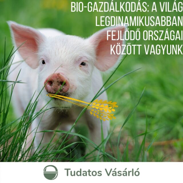 A egyértelműen bio-élelmiszer jobb annak, aki eszi, megtermesztése biztonságosabb a gazdának és a környezetnek is. Jó hír, hogy a legfrissebb adatok szerint Magyarország az ökológiai, azaz bio-gazdálkodásba vont területek bővülését tekintve a 10. legdinamikusabban fejlődő ország a világon! De mit termesztünk? És ki eszi meg?  Olvassátok el legfrissebb cikkünket a tudatosvasarlo.hu-n!  #bioélelmiszer #közösségigazdaság #helyiélelmiszer #tudatosvásárló