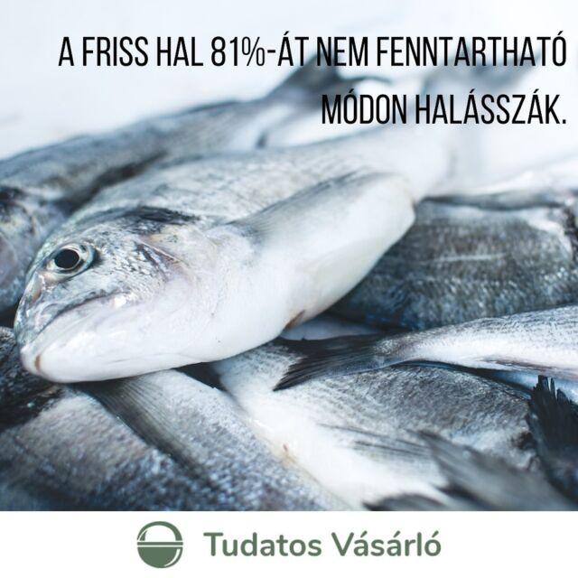Sok szó esik a szárazföldi állattenyésztés környezeti terheléséről, azonban hozzá kell tenni, hogy a kifejezetten egészséges élelmiszernek tartott tengeri halak 🐟🐠🐙 sem épp fenntartható módon kerülnek a tányérra. A francia boltokban kapható friss hal 81%-át nem fenntartható módon halászták le, sem a halászat módszereit, sem területét figyelembe véve - áll a Tudatos Vásárlók partnerszervezete, az UFC-Que Choisir francia fogyasztói szervezet kutatásában. 🖋️A teljes cikkért katt a linkre a bióban!  ⬇️A becsült adatok szerint a Földközi- és a Fekete-tenger halállományának közel 87 százaléka, az Atlanti-óceán északkeleti részének és a Balti-tengernek közel 38%-a túlhalászott, azaz a halak száma csökkenőben van.⛴️ Szomorú ez, ha figyelembe vesszük, hogy az EU-ban a túlhalászat megszüntetésének határideje 2015 lett volna.  📺Ráadásul, ahogy azt a #Seaspiracy című dokumentumfilmben is láthattuk, a különböző védjegyek sem jelentenek semmit. A vizsgálat szerint az MSC (Marine Stweardship Council) logóval ellátott friss hal 84%-át, a fagyasztott hal 66%-át valójában nem fenntartható módon halásszák.   #NKA #tudatosvasarlo #tudatosvasarló #hal #halászat #fenntarthatósága #élelmiszeripar #halászat #környezettudatosság #tenger #sea #óceán #ocean