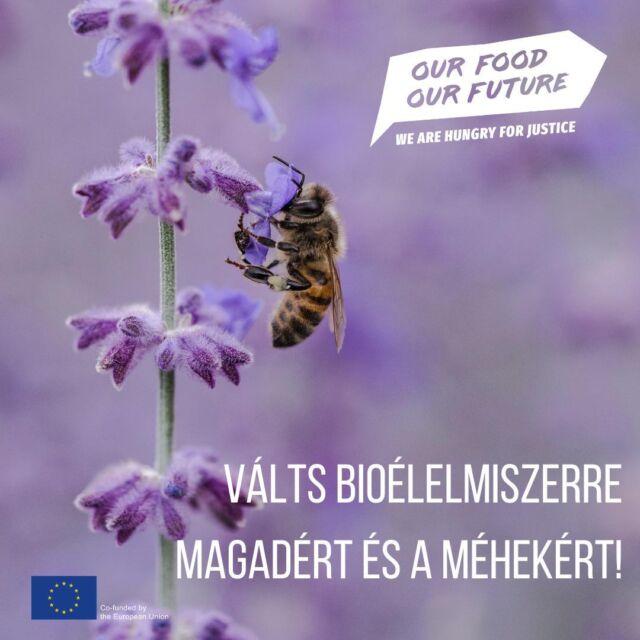 """🐝Ma van a Méhek napja Magyarországon, amit az Országos Magyar Méhészeti Egyesület (OMME) kezdeményezett 1994-ben. A méhek száma évről-évre drasztikusan csökken, melynek legfőbb okai a növényvédő szerek. 🌿A bio gazdálkodással és a bio élelmiszerek fogyasztásával azonban elkerülhetjük ezek a káros anyagokat! Cikkünk a témában elérhető a bióban!  🐝A méhek apró méretük ellenére elengedhetetlen részei az ökoszisztémának: ők gondoskodnak a növények beporzásáról, ezáltal pedig az élelmiszerellátásról. Nélkülük nem ehetnénk barackot🍑, mandulát🌰, almát🍎, nem lennének szemétgyönyörködtető virágos mezők, árnyékot adó és oxigént termelő fák.   🐝Az egyik legkárosabb szer ezekre a dolgos rovarokra, a rendkívül széles körben elterjedt #glifozát, ami ráadásul nemcsak rájuk, hanem az emberekre is káros. Az egyik legelterjedtebb gyomirtó szer a glifozát, pedig 2015-ben ❌""""valószínűleg rákkeltő az emberek esetében""""❌ kategóriába sorolta  az Egészségügyi Világszervezet Rákkutatási Ügynöksége. Az Európai Unóban is felmerült a szer forgalomból való kivonása, mivel nem lehet kizárni, hogy rákkeltő hatású, de egyelőre 2022. december 15-éig meghosszabbították a használati engedélyét. Európában elsőként Ausztria tiltotta be a szer használatát 2019-ben.  🌿A jó hír azonban, hogy a bio gazdálkodások nem használják ezt a káros szert, a bio élelmiszerek fogyasztása mellett pedig a kutatások szerint már pár nap után csökken a szervezetben a különböző növényvédő szerek mennyisége. Érdemes tehát amikor csak lehet, bioélelmiszert választani, magadért, a méhekért és a bolygóért.🌍  #OurFoodOurFuture #GoEAThical #OFOF #DEARProgramme #méltányoskereskedelem #fairtrade #klímabarátkonyha #klímabaráttányér  #foodie #táplálkozás #tudatoséletmód #egészség  #egészségeséletmód #életmód #életmódváltás  #mutimiteszel #mik_gasztro_fitt #mutimiteszel_fitt #veggies #gasztro #zöldség #mutimiteszel_mentes  #meltanyoskereskedelem #hulladekmentes #fenntartható #környezetvédelem #fenntarthatóság"""