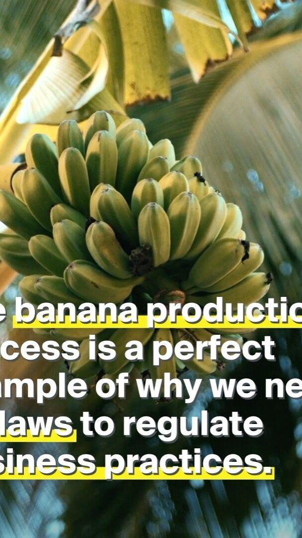 Az olcsó banán ára. 🍌Legutóbbi banános ábránk kapcsán sokan nem értették, hogy mégis miért probléma, hogy a munkások olyan keveset keresnek, hiszen más termékek esetében is több szereplő vesz részt az értékesítés folyamatában. Mi már hosszú ideje foglalkozunk ezzel a témával így valószínűleg túlságosan egyértelmű számunkra, hogy miért embertelen és fenntarthatatlan ez a helyzet. 🍌A banán jó példa arra, hogy minél messzebbről jön egy termék, annál többen vannak benne az ellátási láncban, így a bevétel is többfelé oszlik – mégpedig egyenlőtlenül. Hiába a munkások dolgoznak napi 14 órákat a földeken, veszélyes körülmények között, nekik jut a legkevesebb pénz – és egyetlen kommentelő sem mondhatja, hogy ő megelégedne azzal európaiként, ha a munkájáért csak éhbért kapna. Miért a dél-amerikai munkásoknak kell megfizetniük annak az árát, hogy mi Európában olcsó banánt ehessünk? 🍌A banán remekül szemlélteti, hogy miért van szükség szigorú európai szabályozásra az ellátási láncok átláthatóságáért, mert nemcsak erre a terményre igaz, hogy az emberi jogok megsértésével és környezetpusztító módon termelik.  Mi a baj a banánnal, amiből egy átlagos európai évi 1️⃣7️⃣ kg-t fogyaszt? ❗A pamut után a legtöbb rovarírtót és vegyszert a banántermesztéshez használják, ezek közül ez EU-ban sokat már betiltottak. ❗A munkások embertelen munkakörülmények között dolgoznak: napi 14 órát védőfelszerelés nélkül, így a permetszerek közvetlenül rájuk és a szállásukra kerül. ❗A létminimumnál kevesebbet keresnek: a banán árának 4-9%-a az övék, míg a szupermarketek, akik folyamatosan lenyomják a banán vételi árát 40%-ot tesznek el. Mit akarunk? Hogy a szupermarketek legyenek felelősek az emberi jogokra és környezetre gyakorolt hatásukért! Olyan új szabályozásra van szükség, ami: ✅Megállítja az egyenlőtlen beszerzési gyakorlatot, ami a munkások jogainak kizsákmányolásához vezet. ✅Megvédi a munkásokat és a környezetet a veszélyes vegyszerektől. ✅Lehetővé teszi a szakszervezetek létrejöttét, megvédi a 