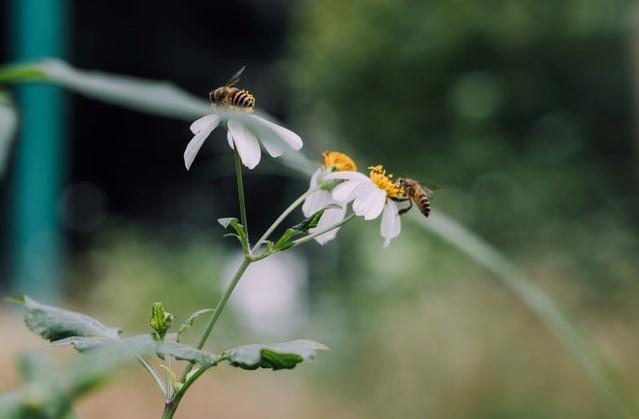 méhlegelő méhbarát balkon kert