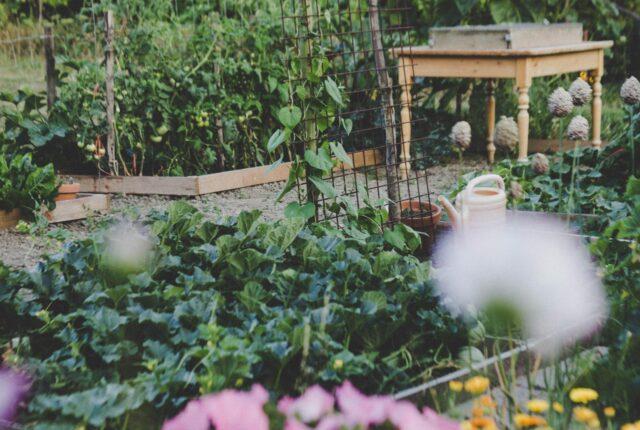 közösségi kert csatlakozás indulás