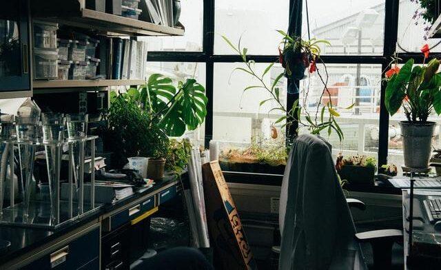 lakás levegő szobanövény