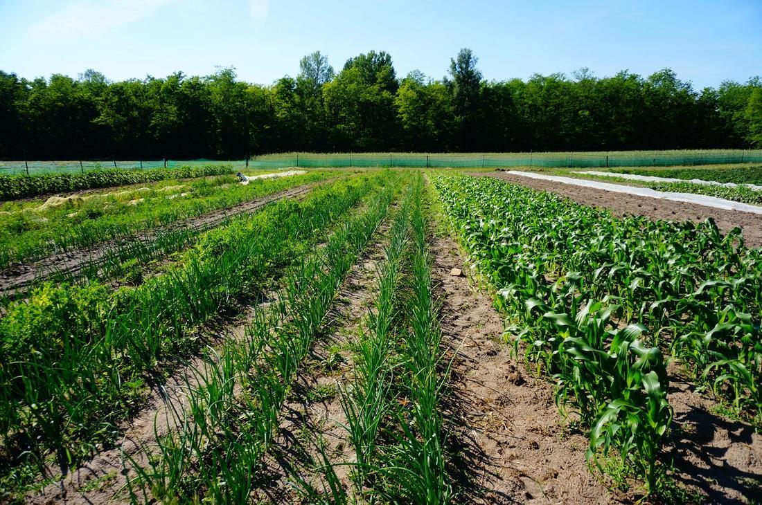 közösségi mezőgazdaság Bio Pipacs
